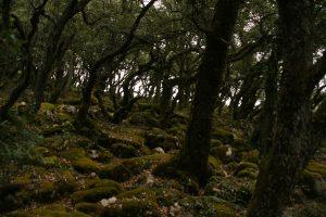 Senderismo - Sierra de Arkamu (Araba)